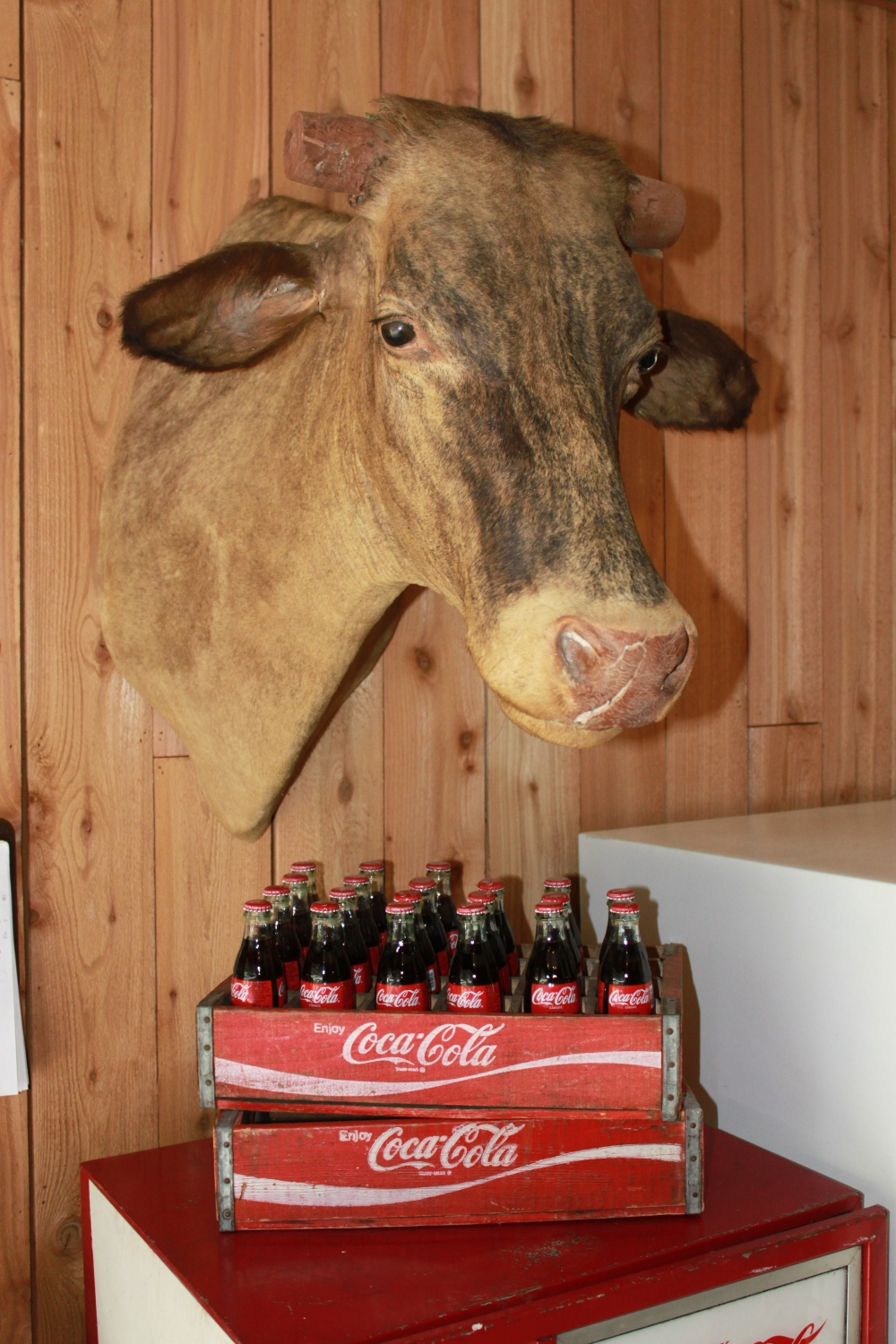 Longhorn Over Coke Machine