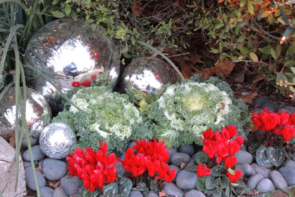 Kale, cyclamen and big gazing balls