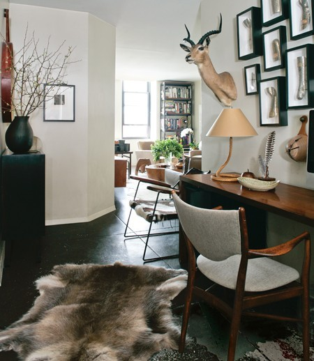 Antelope and Coyote in Modern House