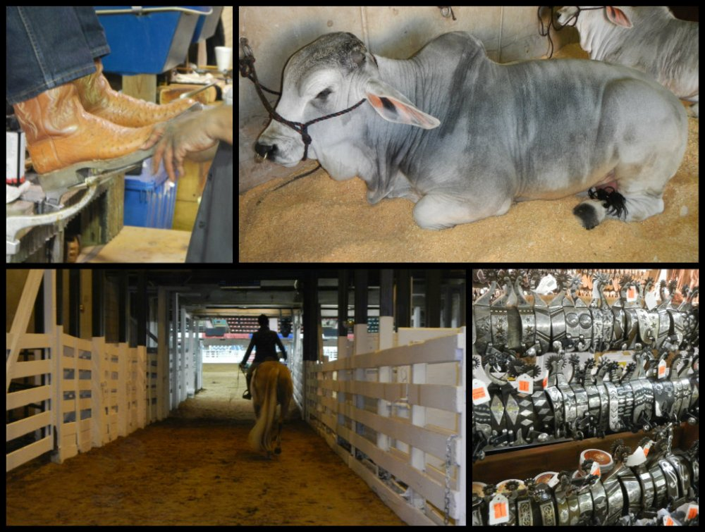 Ft Worth Stock Show Collage 3