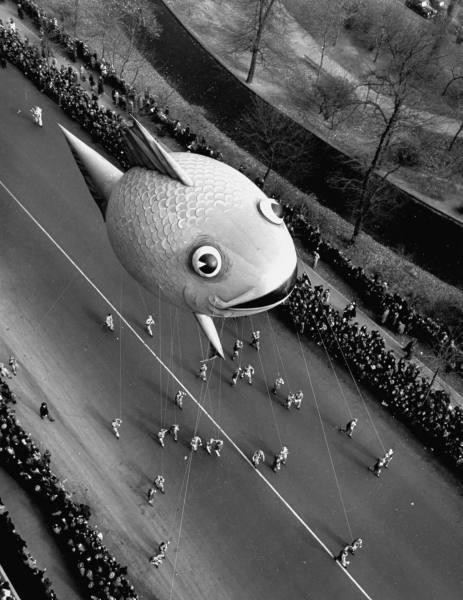 Fish Swiming Down Main Street