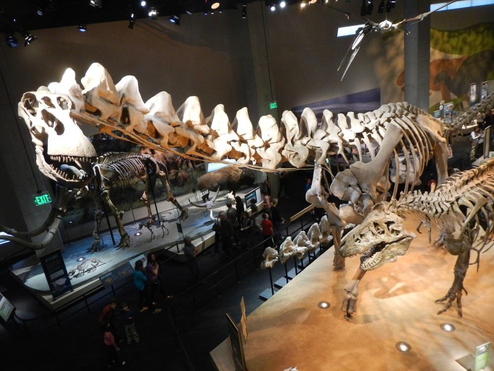 Batteling Bones in th fossil room