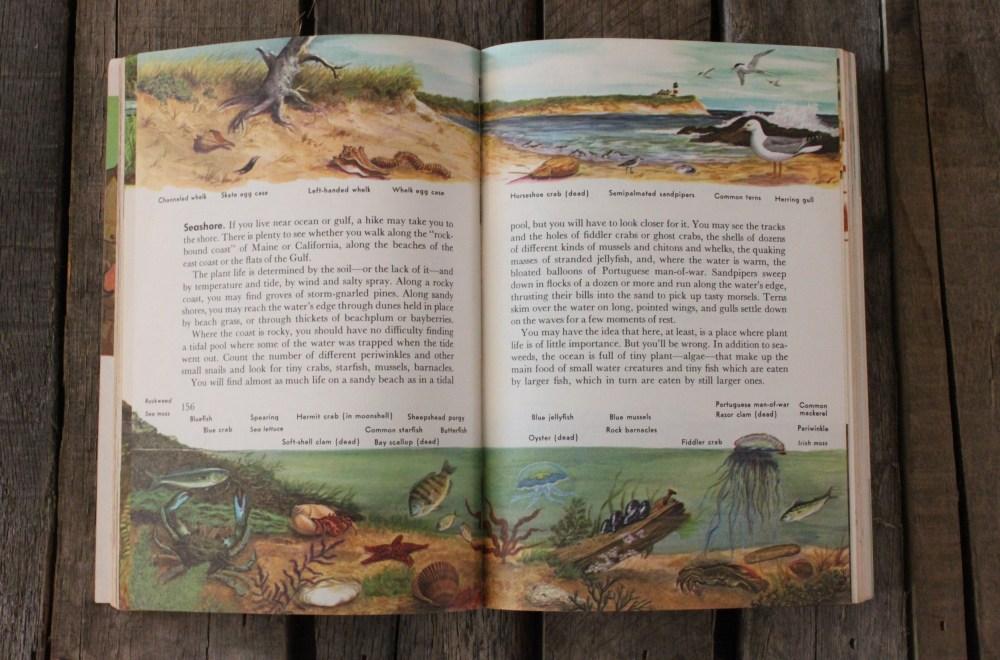 Identifing Wildlife in the Boy Scout Handbook