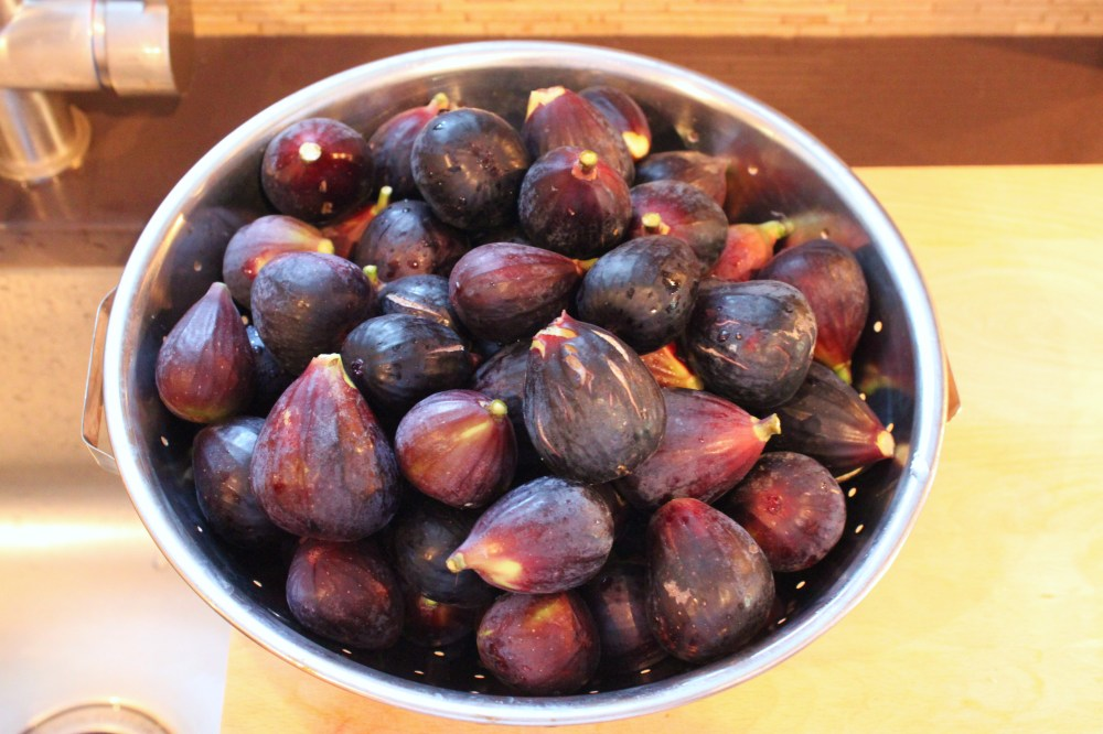 Collander full of Figs from Our Fig Tree