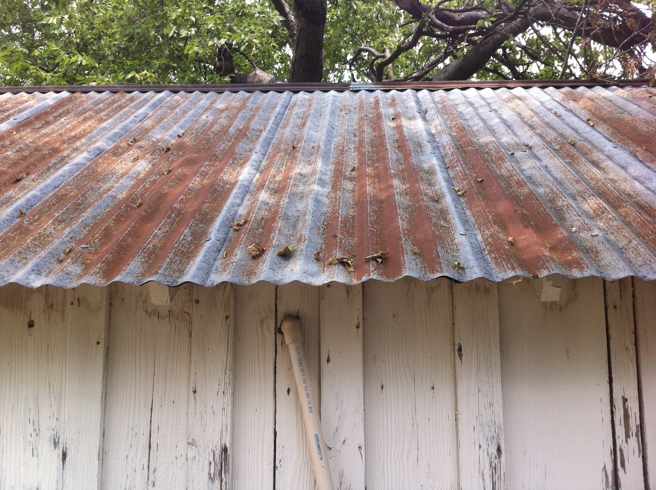 Tin roof on a tool shed the cavender diary for Shed roofs
