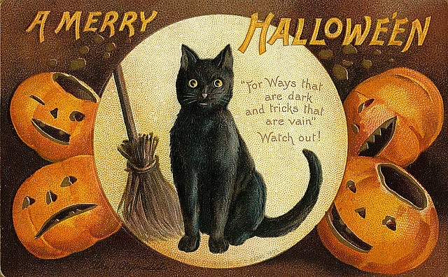 Vintage Black Cat Halloween Postcard