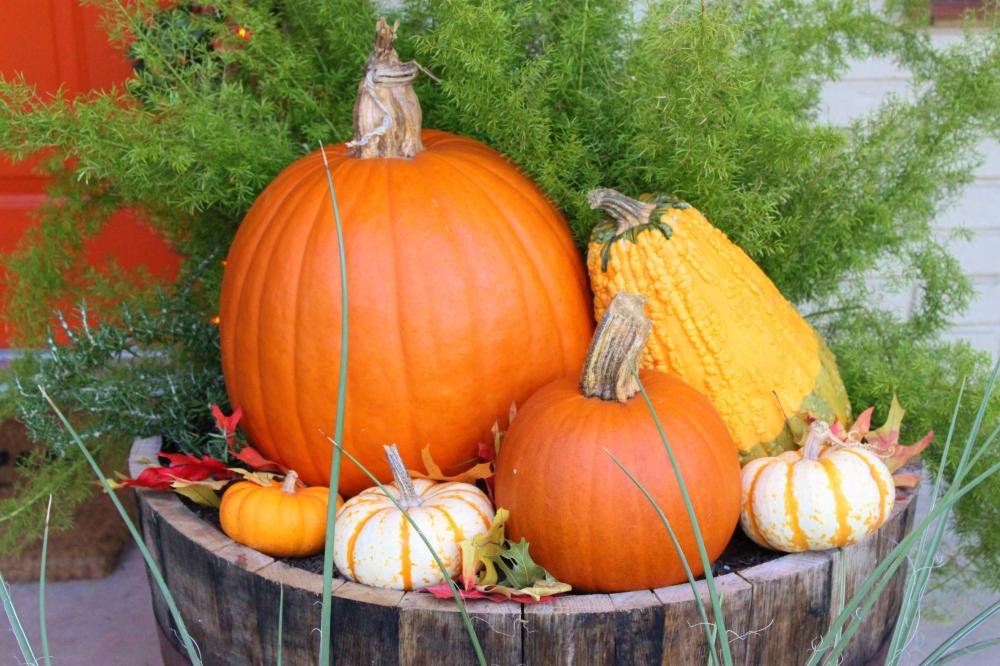 Pumpkins in the Whisky Barrel