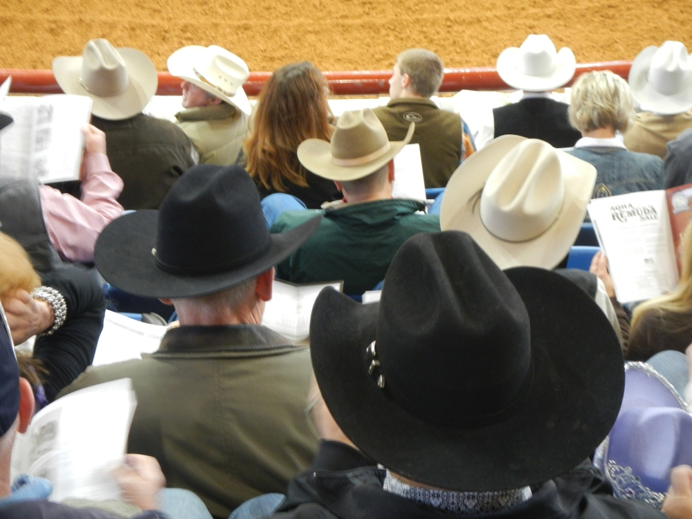 Sea of Cowboy Hats at the Ft Worth Stock Show