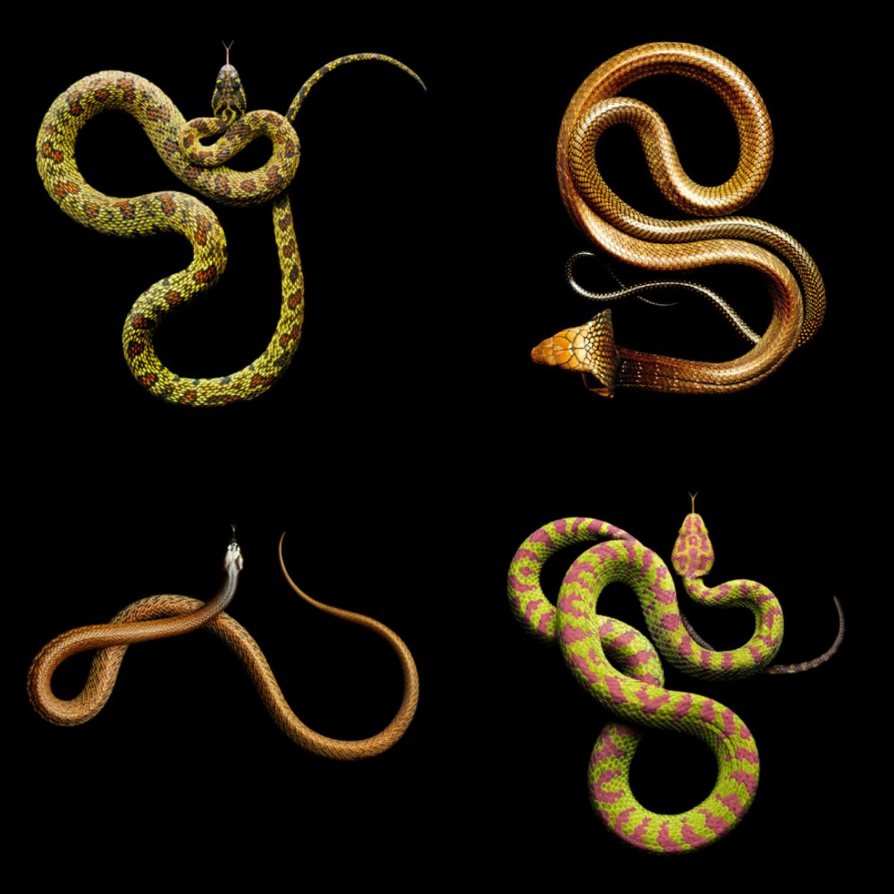 Mark Laita Snakes Collage3