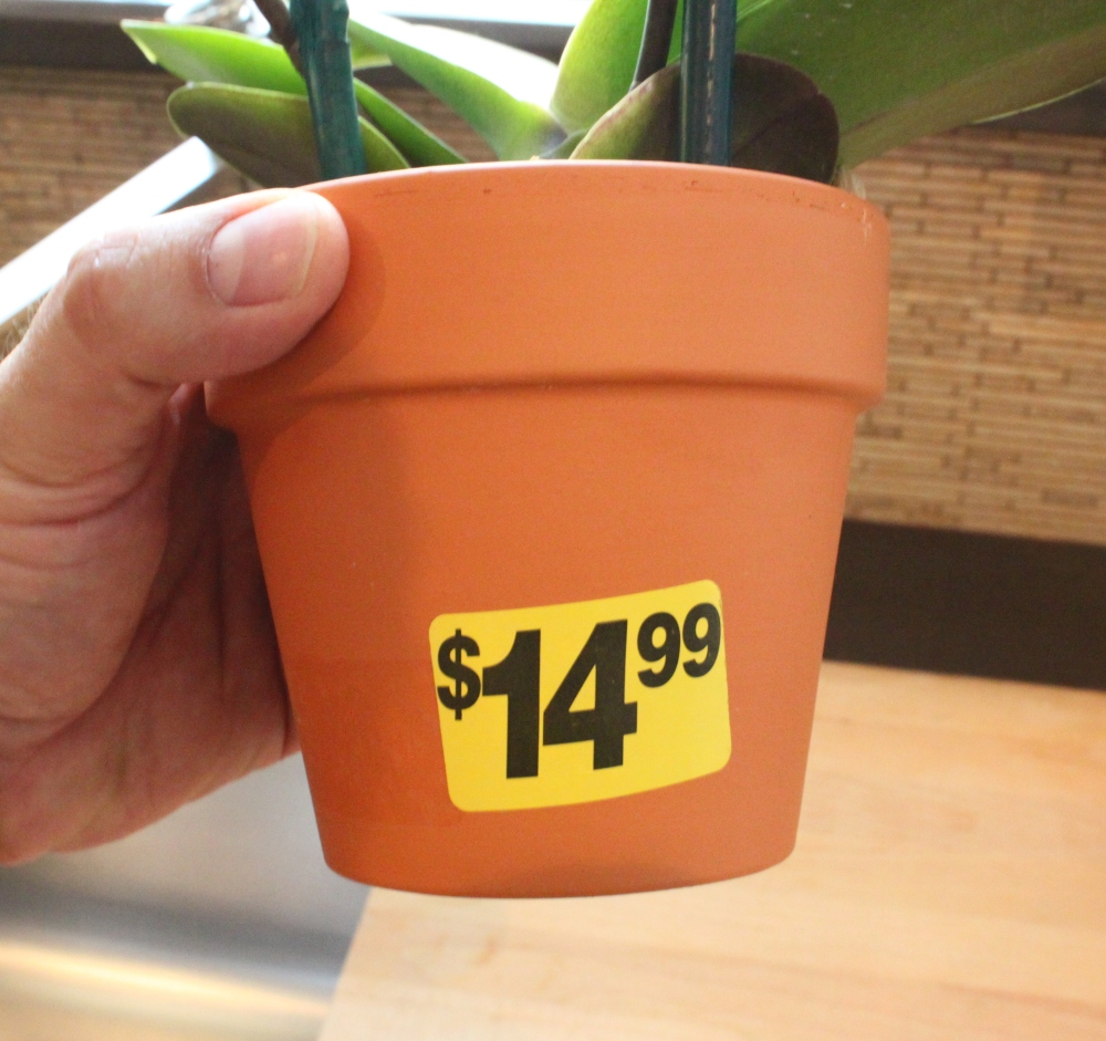 Best Thing About This Orchid is the Price
