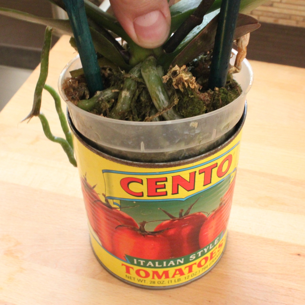 Slide the Plastic Pot into a Clean Tomato Can