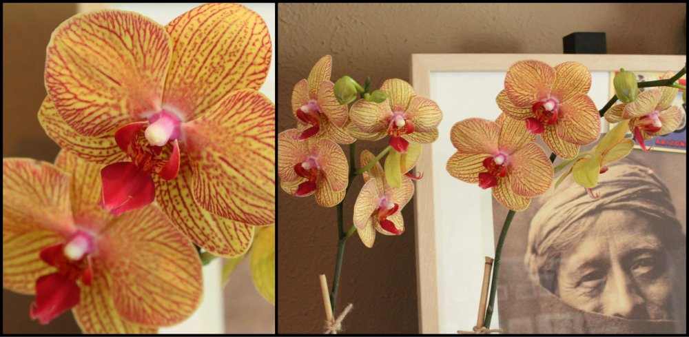 Tomato Can Orchids Collage