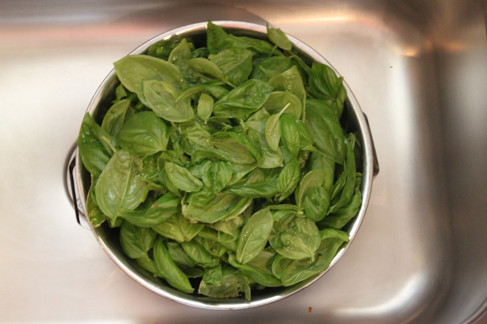 Collandar Filled with the Washed and Dried Basil