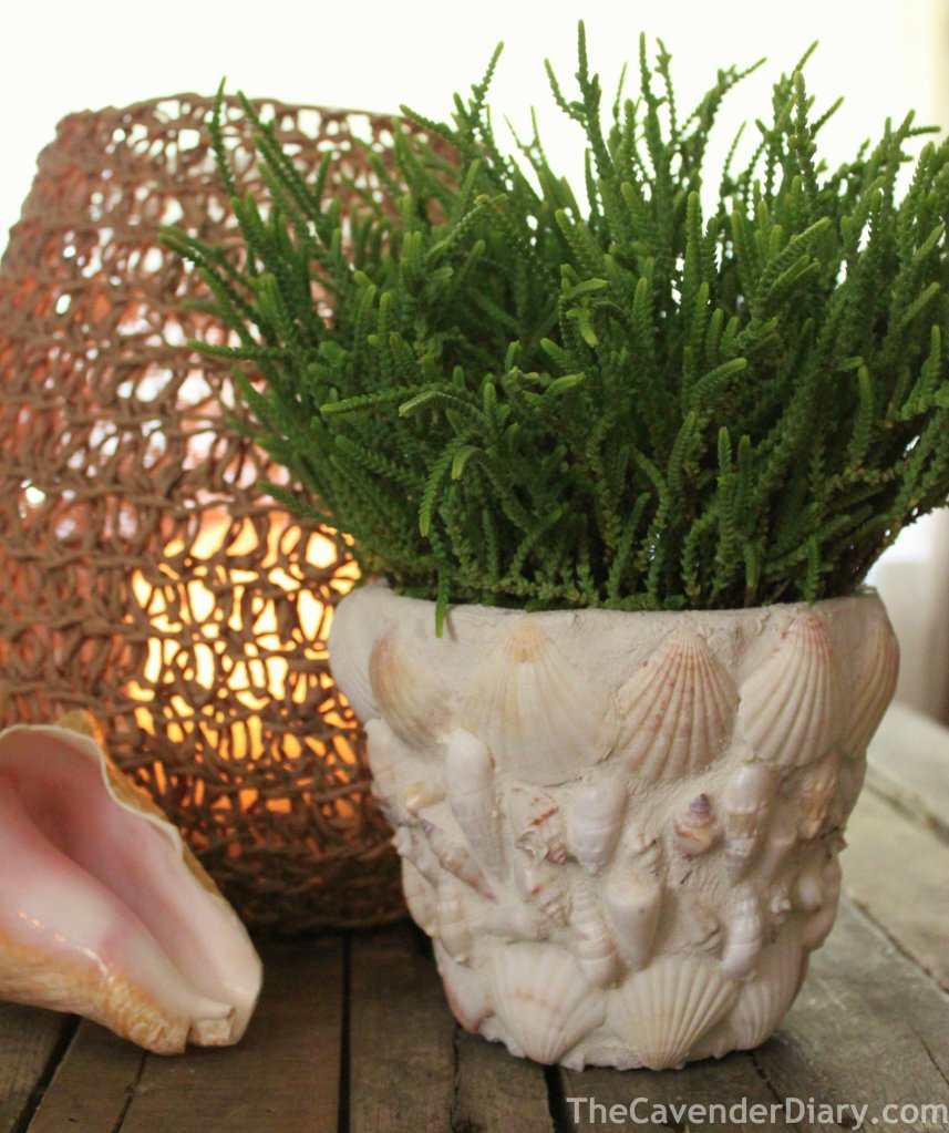 Sea Shell Flower Pot from the Cavender Diary Boys
