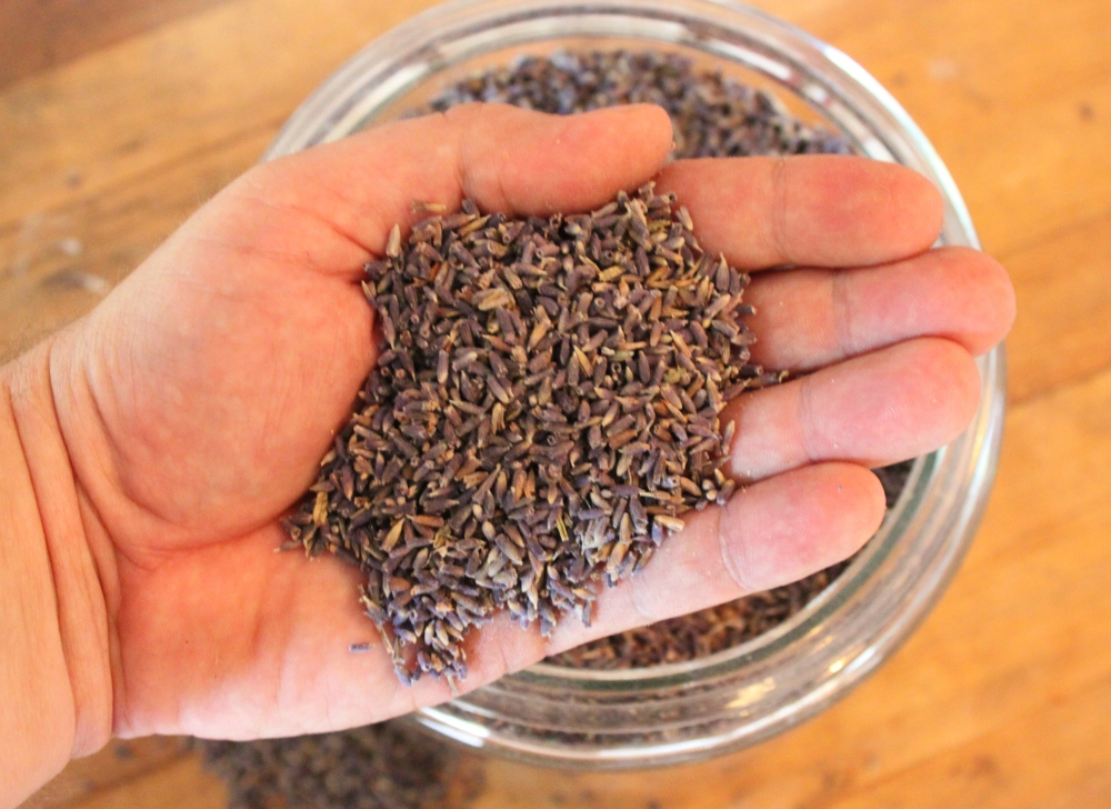 Dried Fragrant Lavender