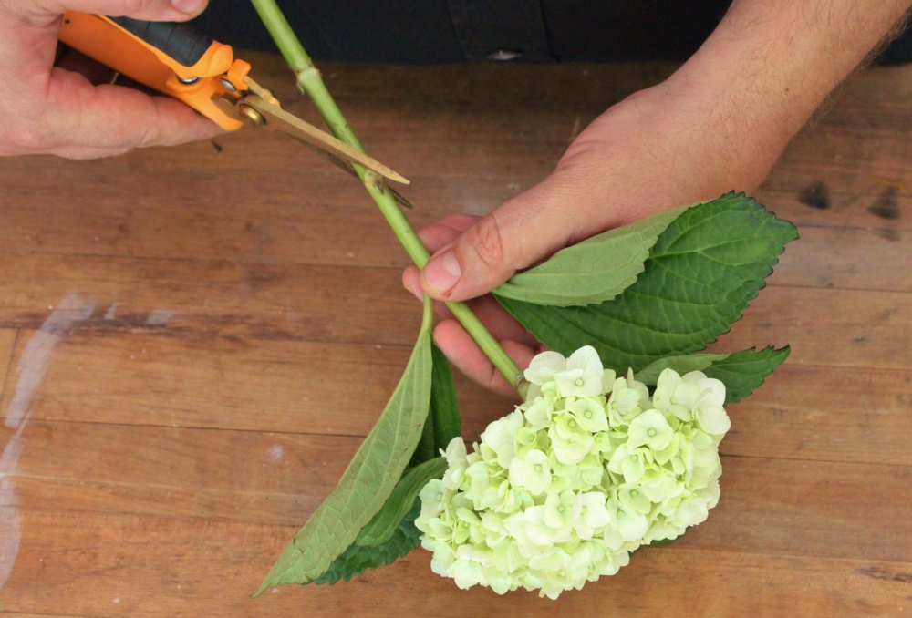 Always Cut Fresh Flowers at an Angle with Sharp Clippers