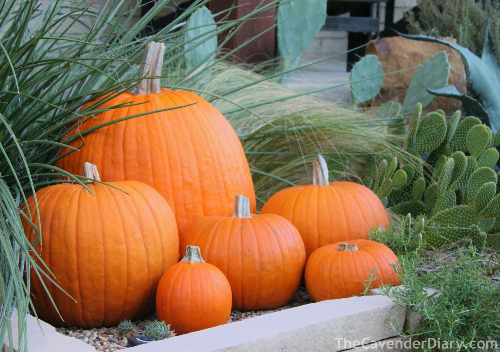 Pumpkins and Cacti in the Cavender Flower Bed