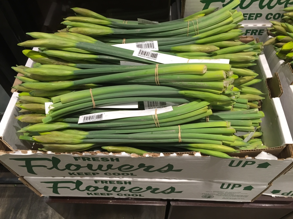 Live Daffodils at the Grocery Store