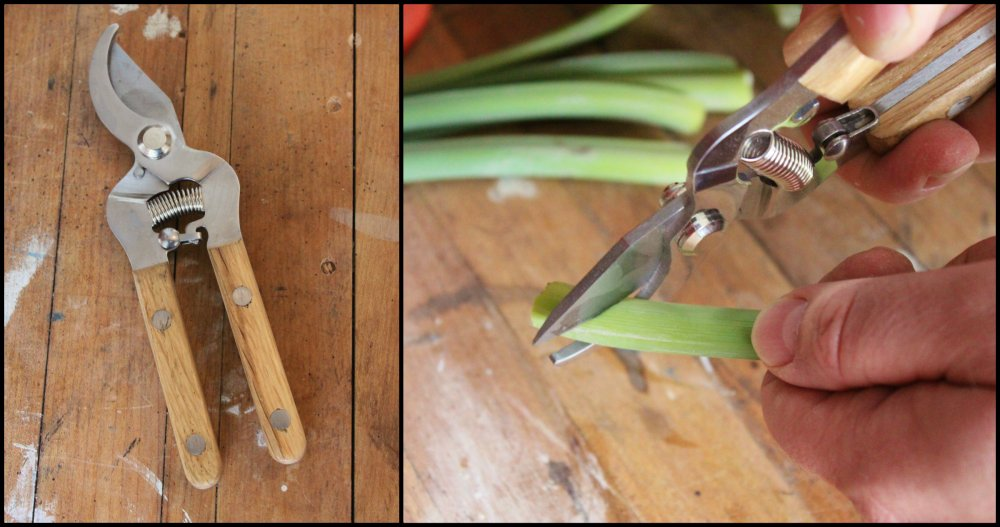 Sharp Clippers to Cut Each Stem at a 45 Degree Angle
