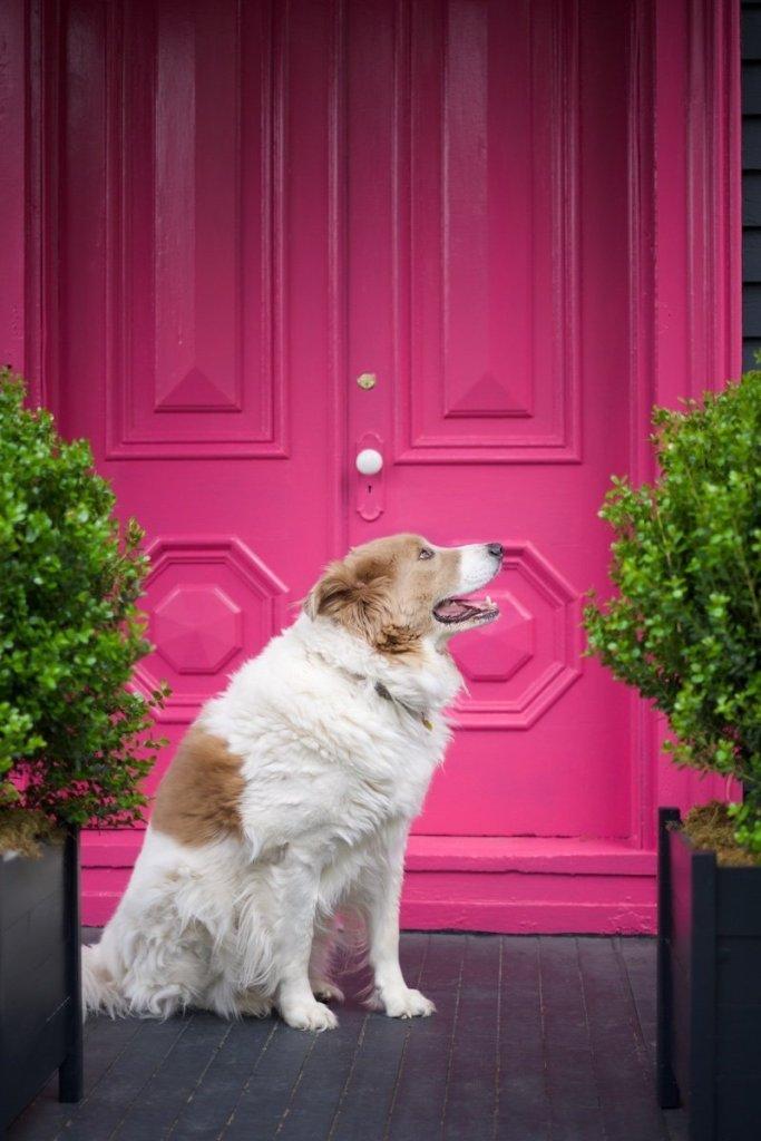 Buck Against that Pink Front Door
