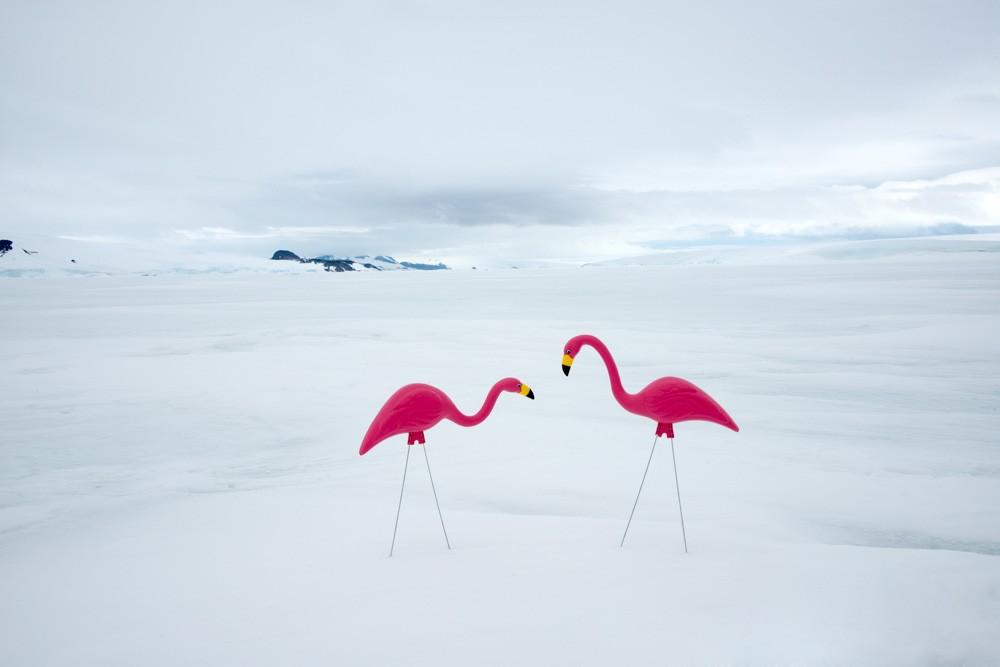 Pink Flamingos by Gray Malin