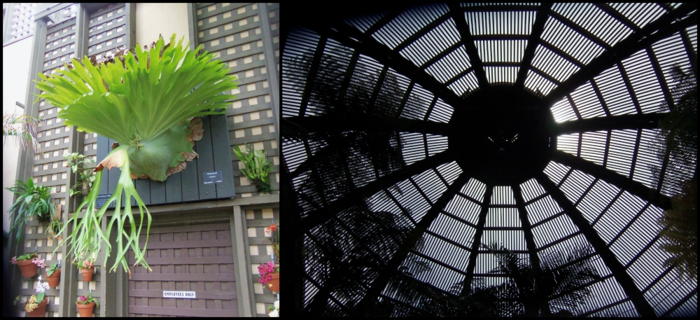 Botanical Building at Balboa Park Collage