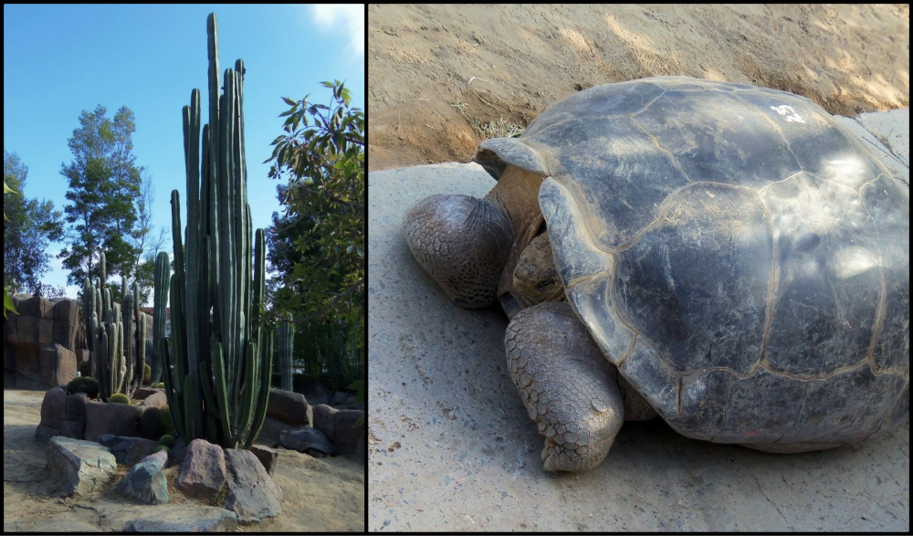 San Diego Zoo Collage 2