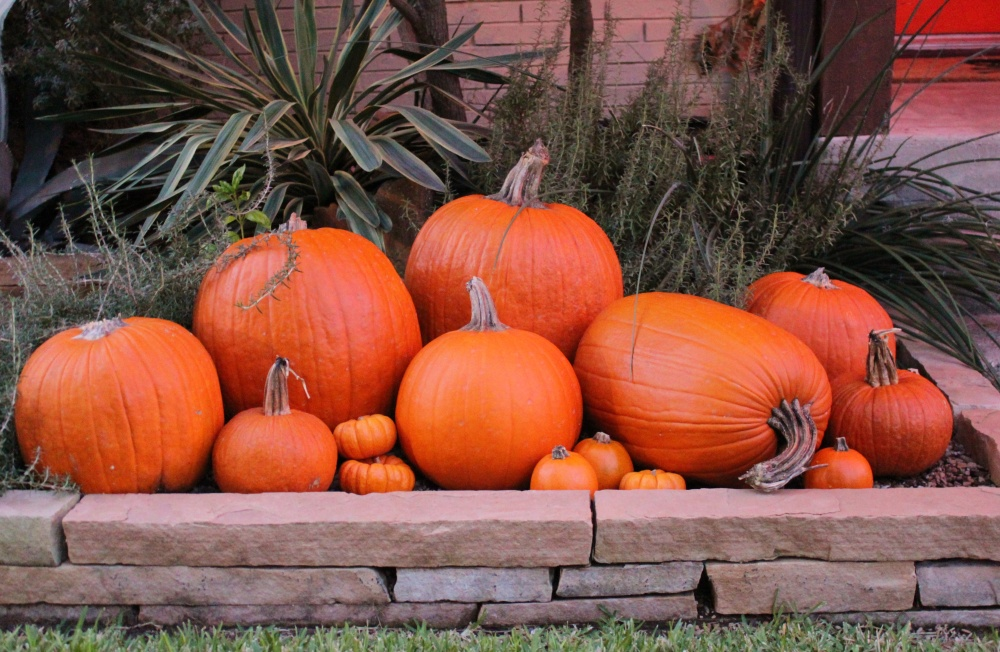 Piles of Pumpkins in the Cavender Flower Beds