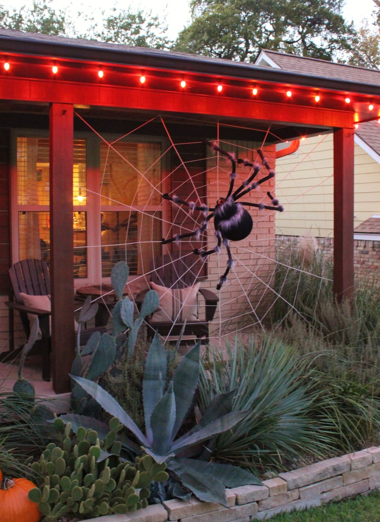 The Giant Spider Hovering over the Cacti