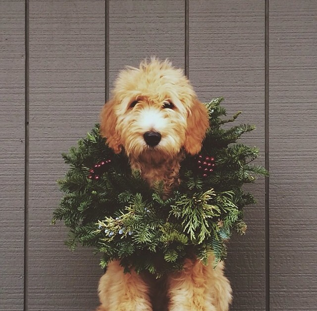 Dog with Holiday Wreath