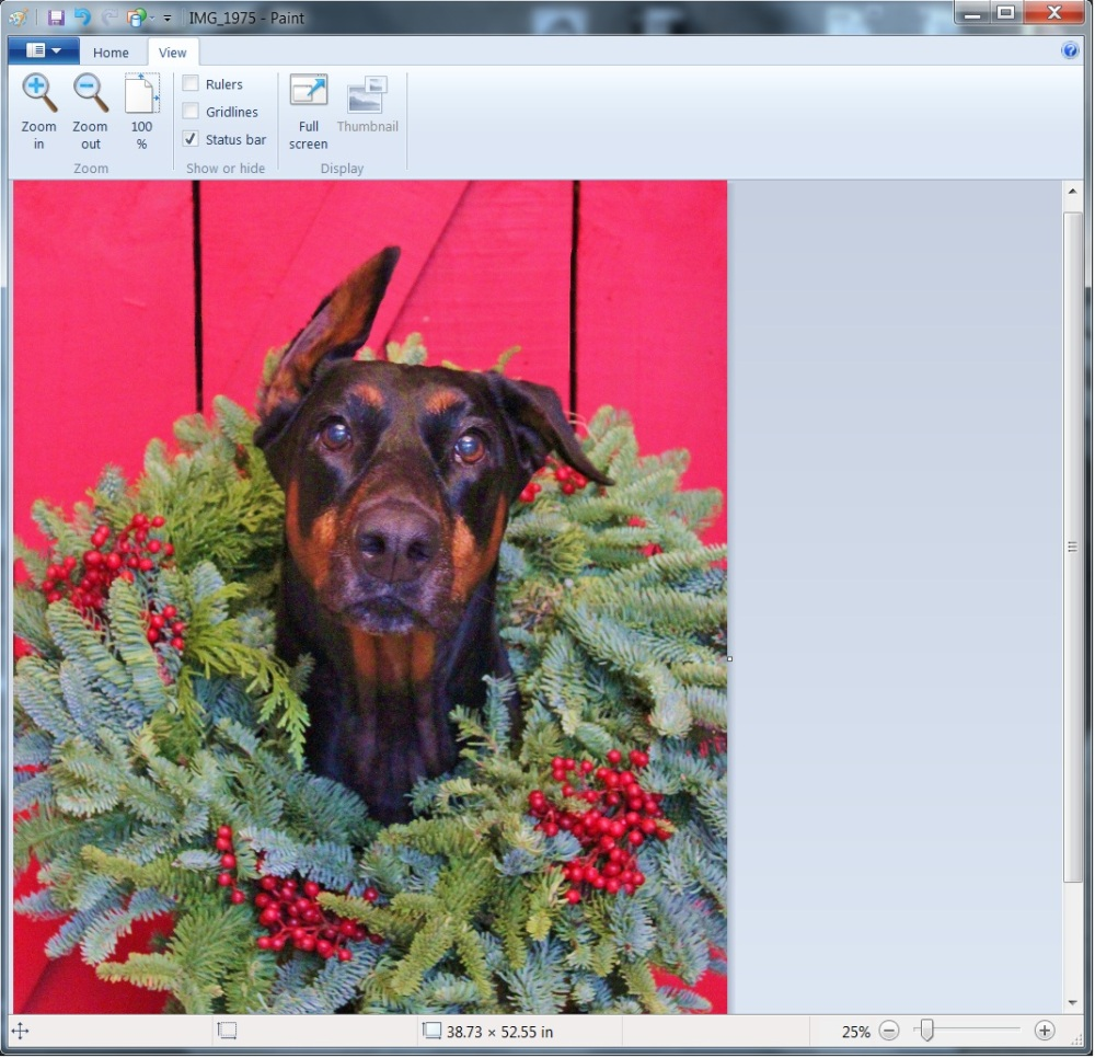 Editing Harley in the Christmas Wreath in Paint