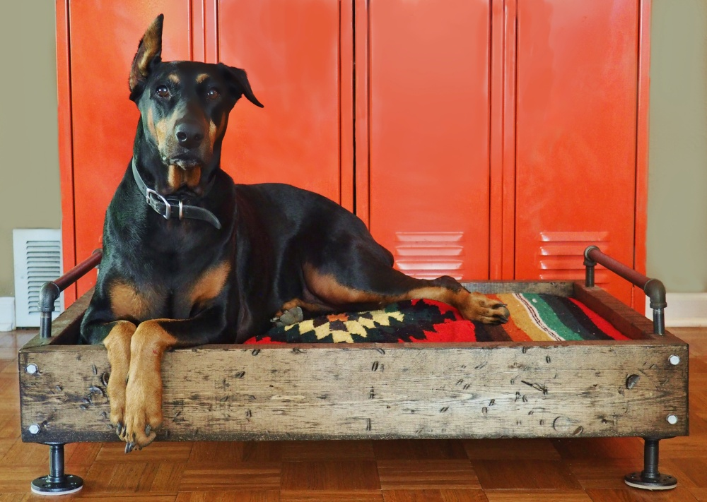 harley-davidson-laying-on-her-industrial-dog-bed