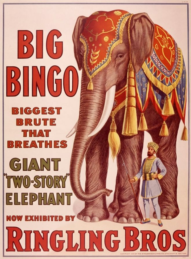 Ringling Bros Giant Elephant Poster
