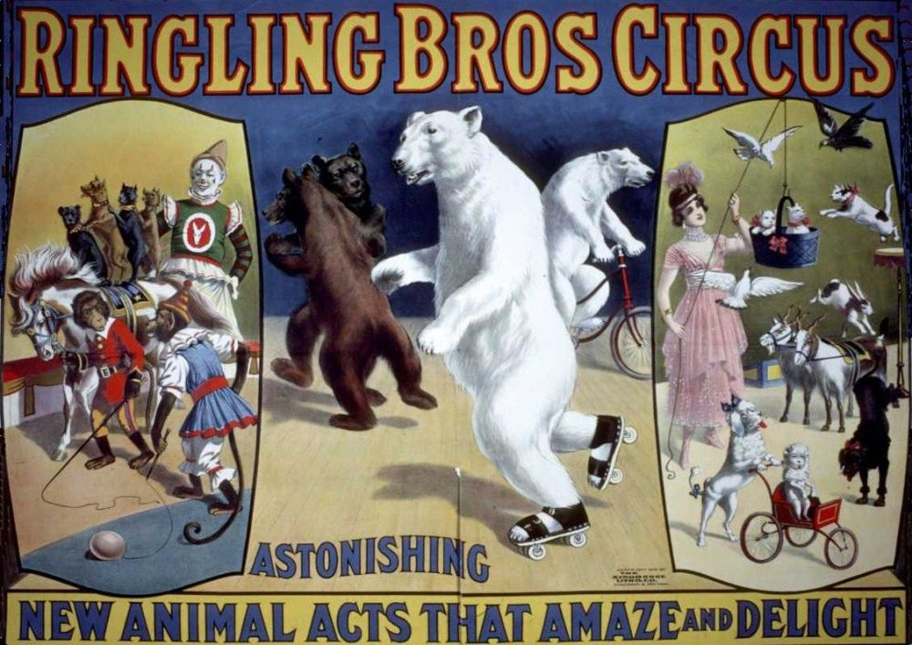 Ringling Bros Skating Bears Poster