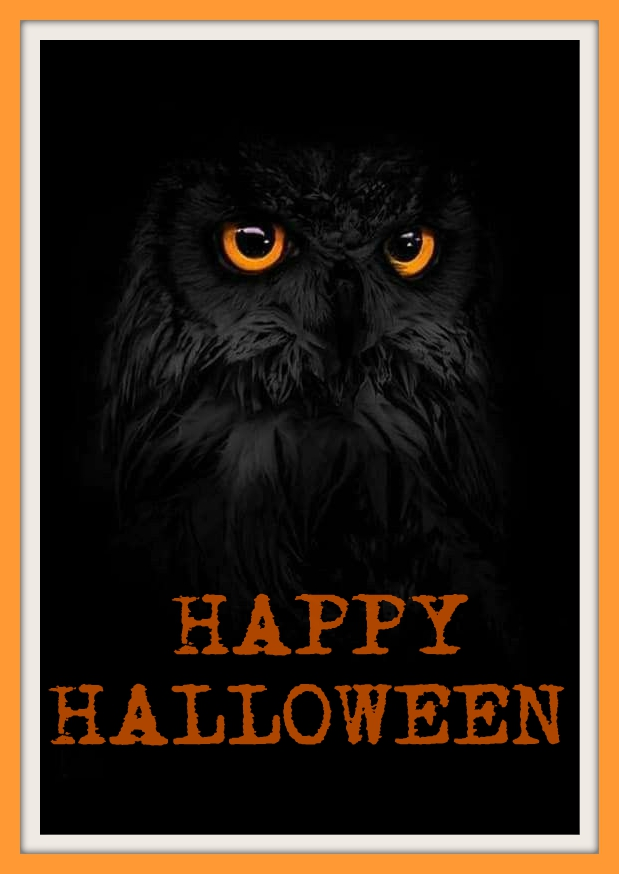 Black Owl Black Owl Happy Halloween