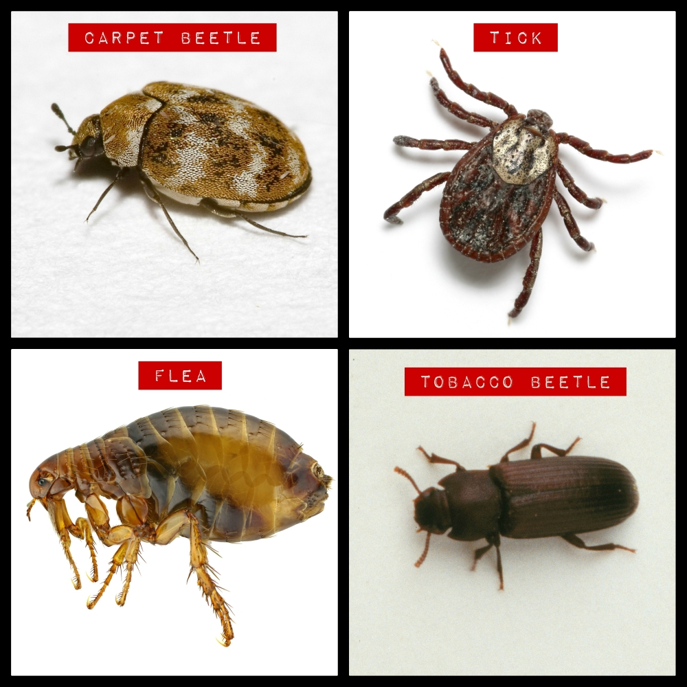 These Aren't Bed Bugs