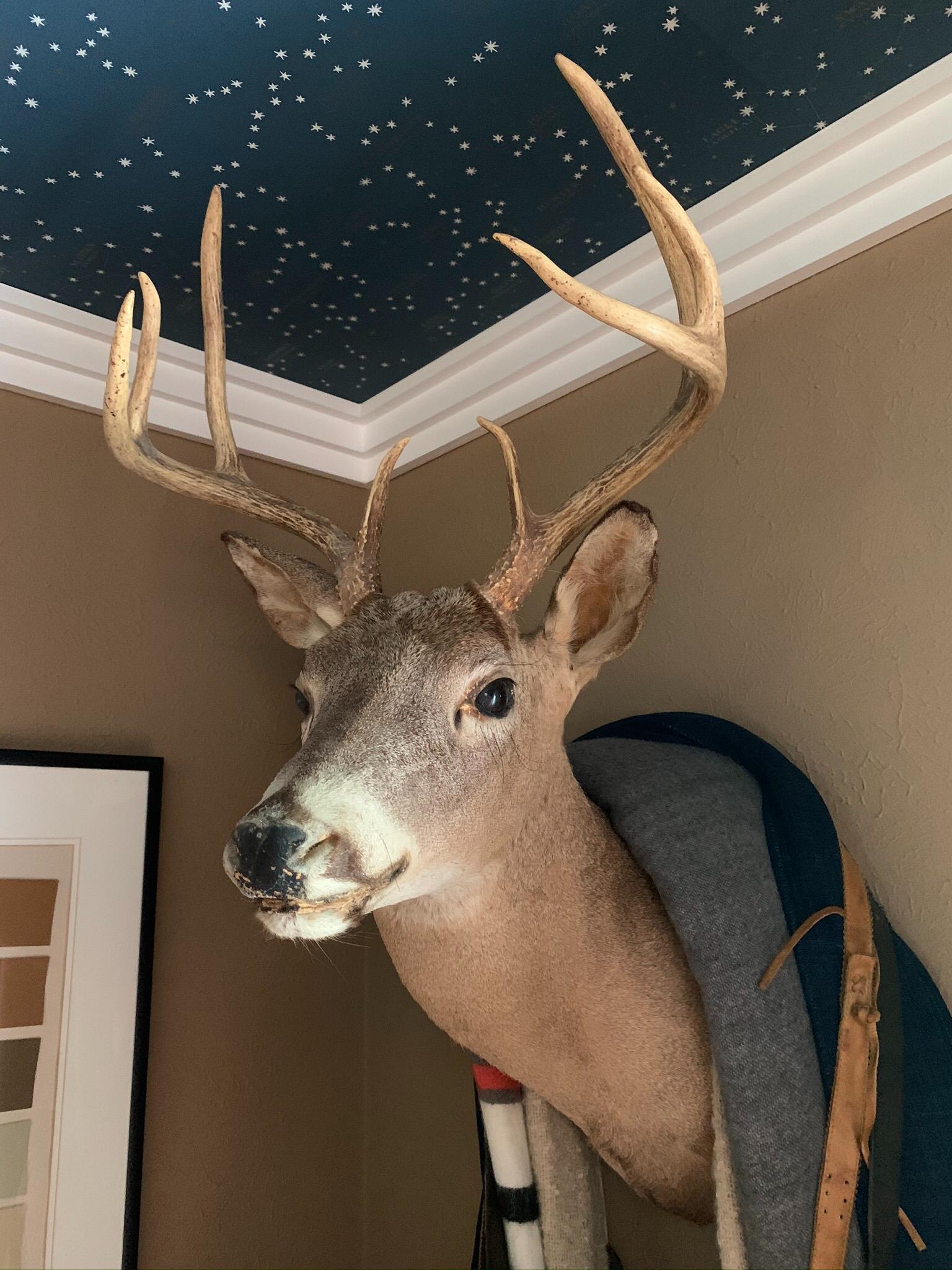 Whitetail deer Mount with Ralph Lauren Northern Hemisphere Wallpaper in Guest Room